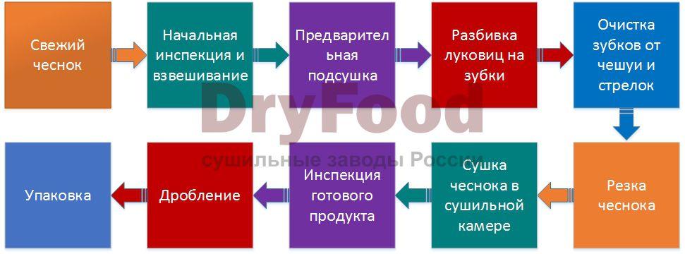 Процесс производства сушеного чеснока
