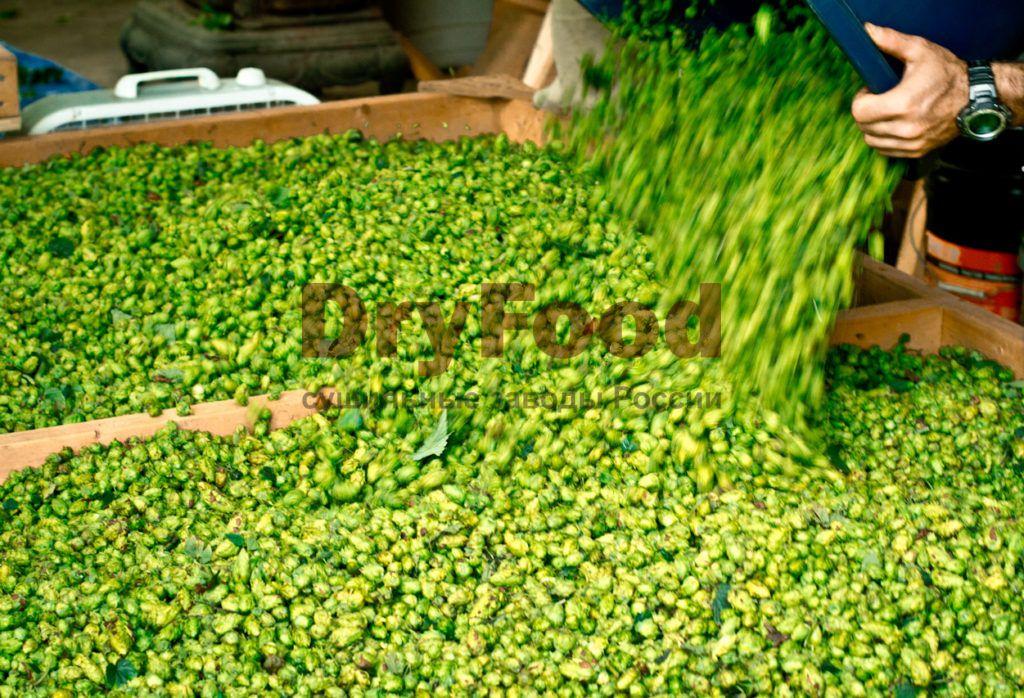Производство хмеля